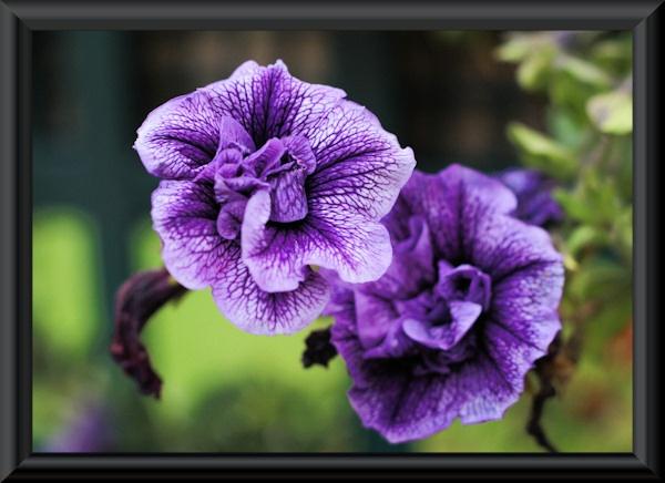 Flower by CraigF