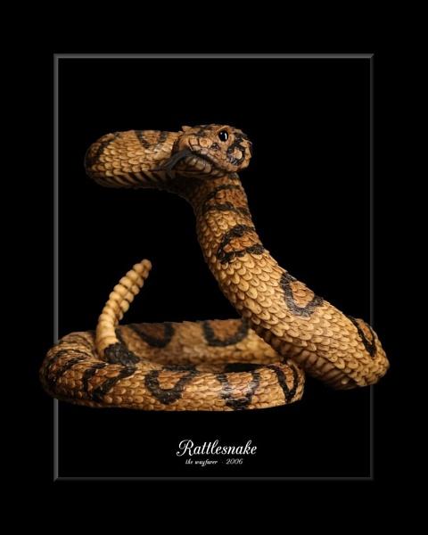 Rattlesnake by wayfarer
