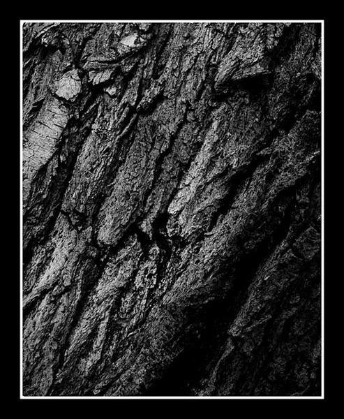 Bark by EPZSam