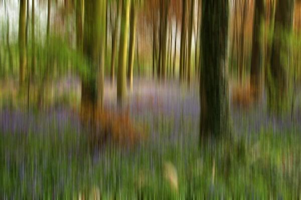 Dreamscape by BillM