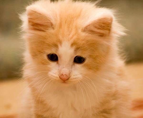 NFC Kitten by tom67