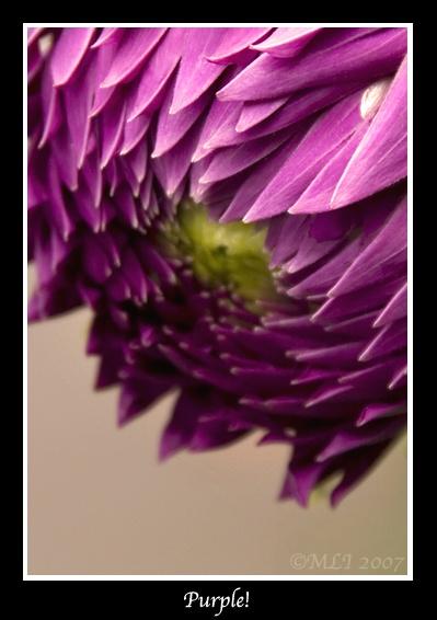 Purple!! by mialewis