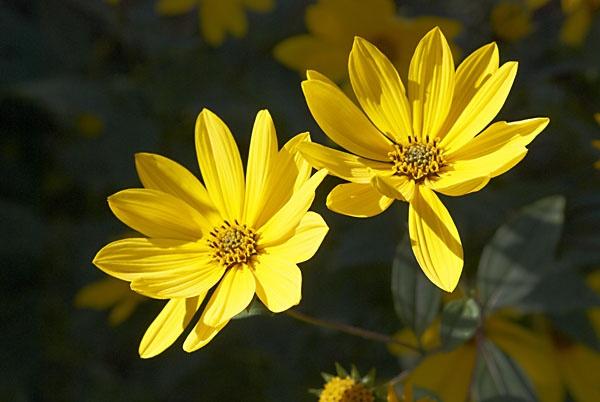 Yellow by saxon_image