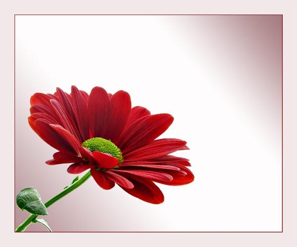 Radiant Red by sandrish