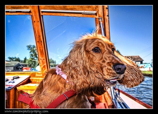 Ahoy there, shipmate! by gavinconlanphoto