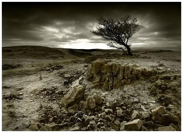 Limestone Tree toned by geoffrey baker