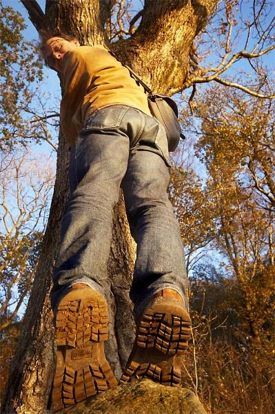 The Hawthorne Tree by Paul_Barr