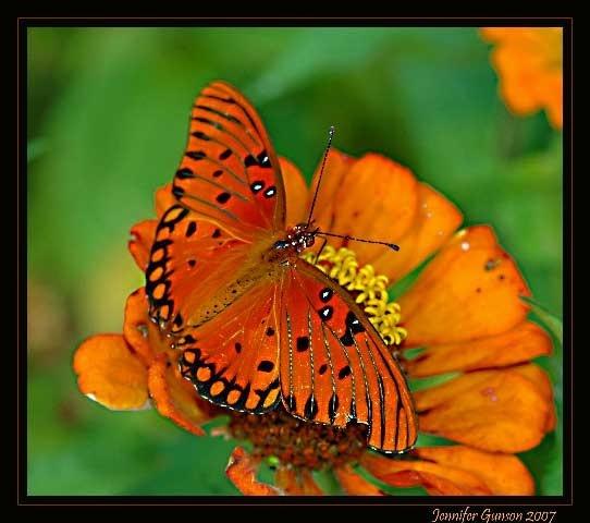 Orange you glad by JenG