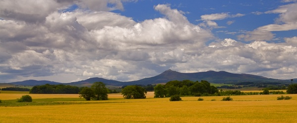 BENNACHIE - CROPS TOPPED BY by JASPERIMAGE
