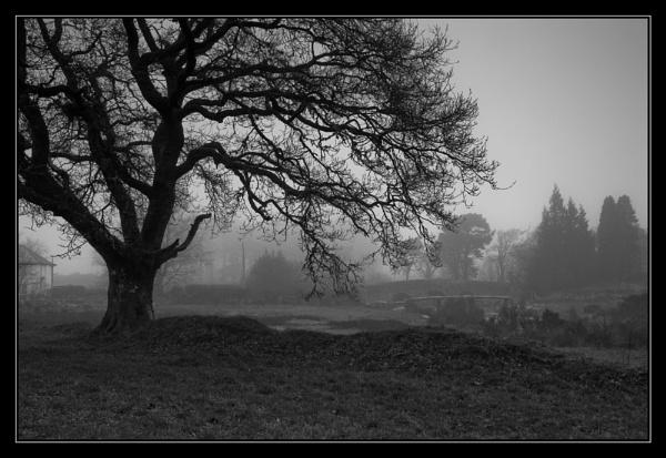Misty mono by flyingseale