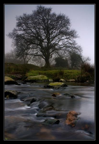 Misty tree by flyingseale
