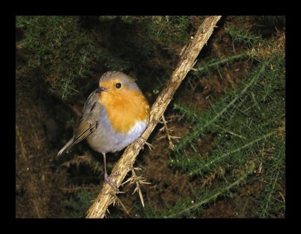 Posing Robin by whoami2b