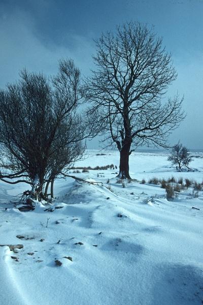 Winter Scene near Blaenavon. by Badgerfred