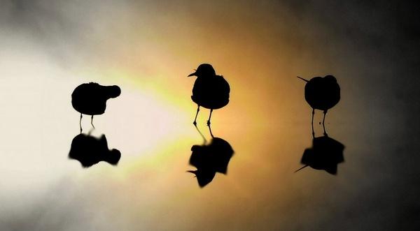 3 birds by peteredwillis