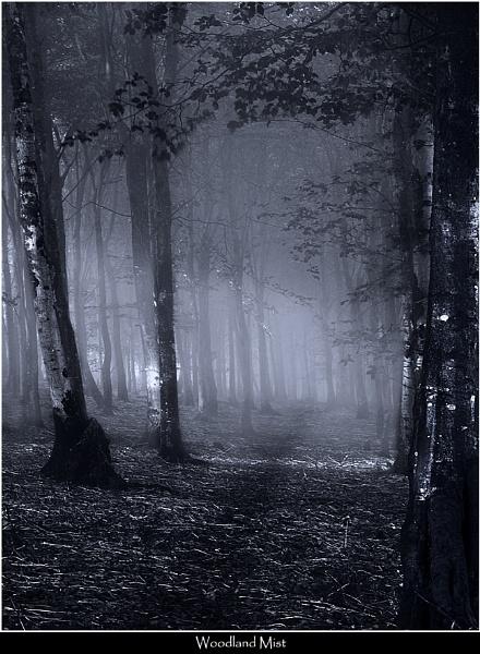 Woodland Mist by Kris_Dutson