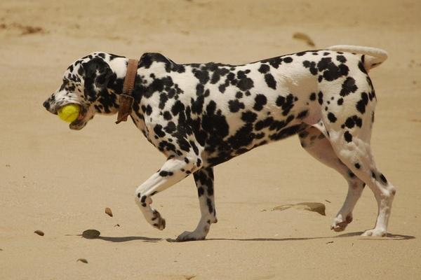 Dog playing on beach East London by Lindaephotozine