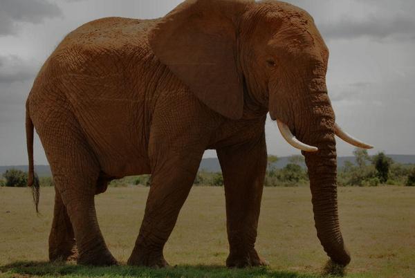 Elephant very close by Lindaephotozine