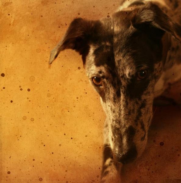 Top Dog by rachepix