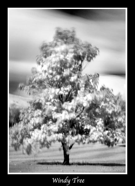 Windy Tree! by mialewis