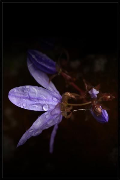 Purple Rain by Morpyre