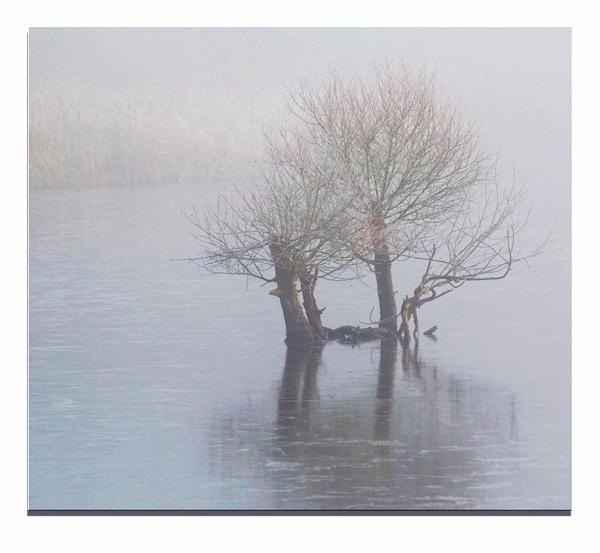 Still Foggy by Ian Hunter