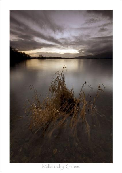 Millarochy Grass by phillips