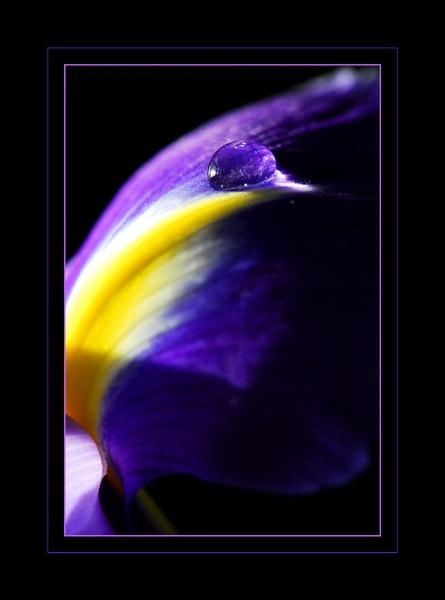 Purple Rain by Rachy1821