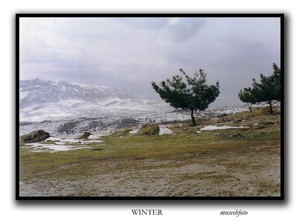 Winter by museebfoto