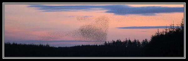 Love Birds by warbstowcross