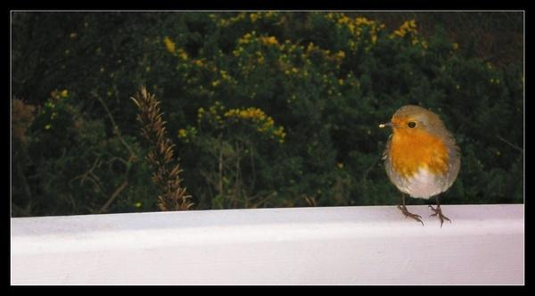 Feeding Robin by whoami2b