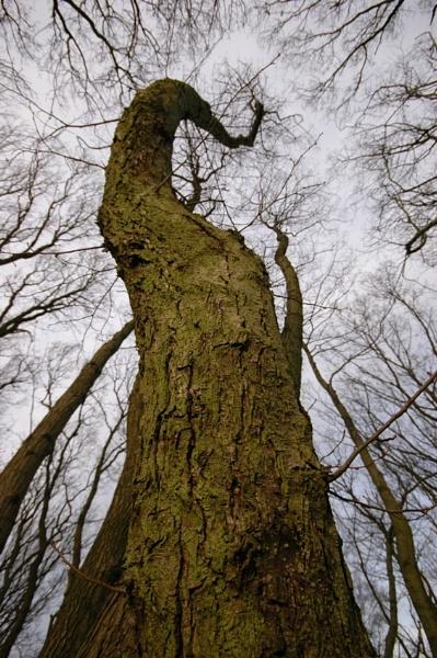 Tree top path by Birdseye