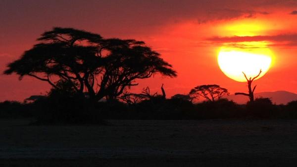 Acacia sunset by jdanzola
