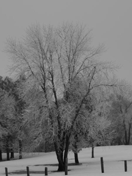 Frosty by lindin