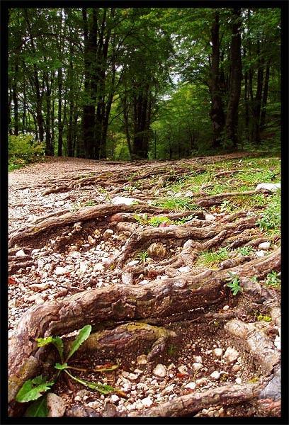 Slovenian Forest by _estel_