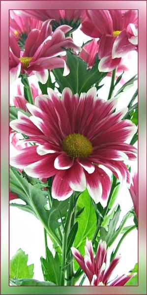 Flower Spray by sandrish