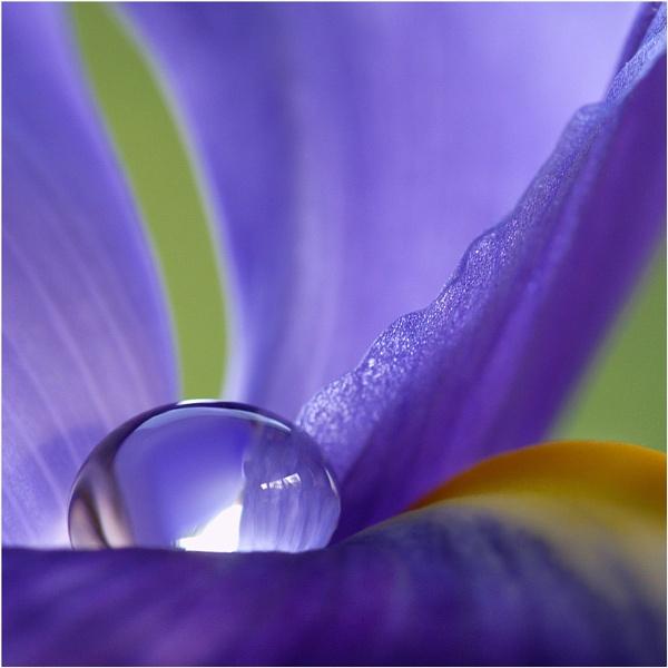 A drop on an iris by BeiK