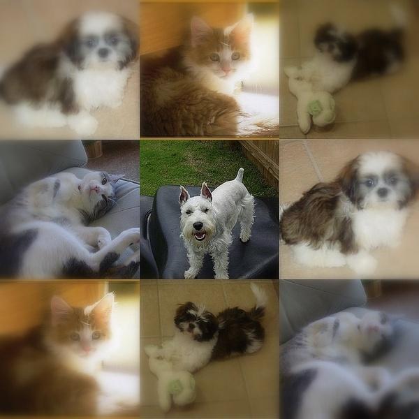 4 of my pets by FlutrByShutrBy