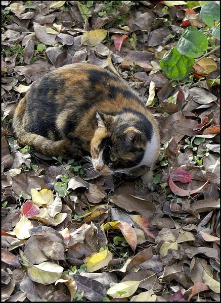 Cat by museebfoto