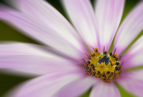 Zoom Flower by Gareth_H