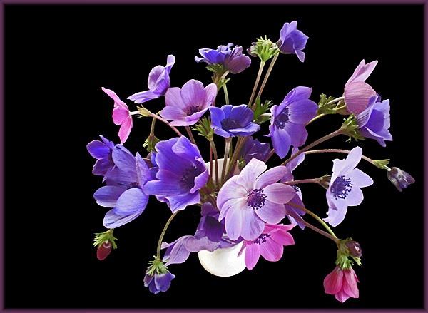 vase of anemones by CarolG