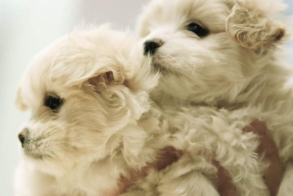 Pups by azhurian