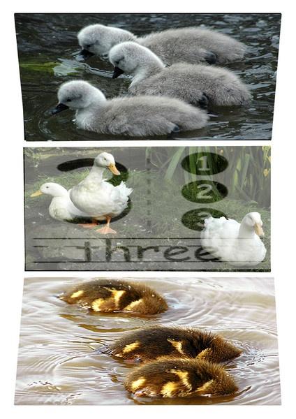 X three birds! by sparklep