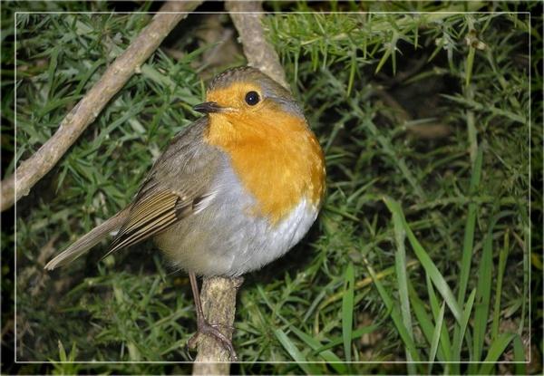 Last Robin by whoami2b