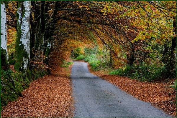 Autumn stroll anyone? by sospan