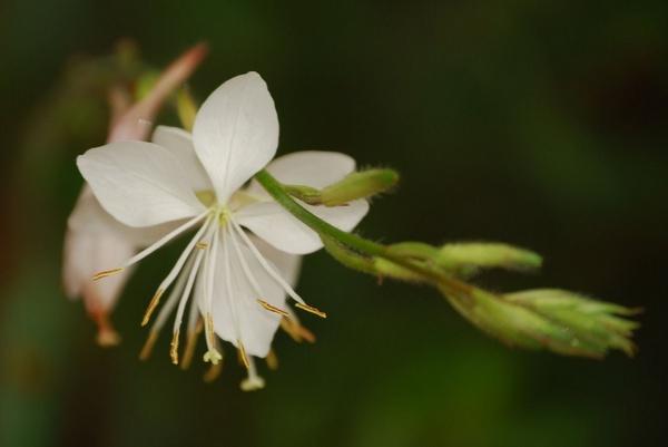 Delicate White by Lindaephotozine