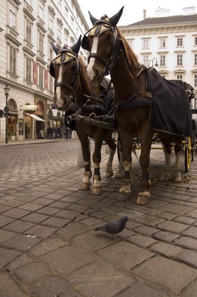 Wien Horses by pepperst