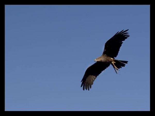soaring by nicletog