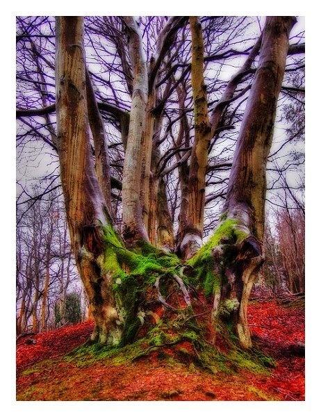 Surreal Trees by Ukulele_Lady