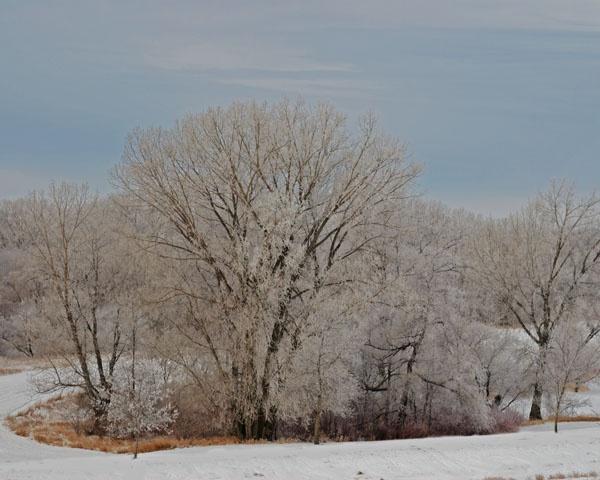 Frosty Tree 6 by lindin