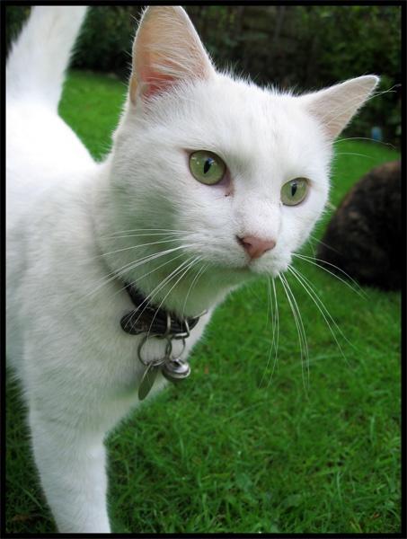 White Cat, Green Eyes by _estel_